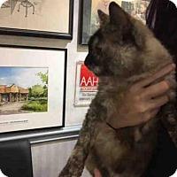 Adopt A Pet :: A619260 - Louisville, KY