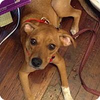 Adopt A Pet :: Lularoe - Baltimore, MD