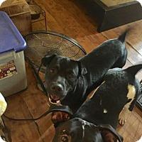 Adopt A Pet :: Raymond - Loganville, GA
