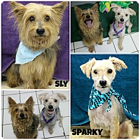 Adopt A Pet :: Sly & Sparky - Forked River, NJ