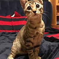 Adopt A Pet :: Baby - ROSENBERG, TX