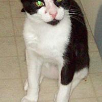 Adopt A Pet :: Sylvester - Waller, TX