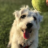 Adopt A Pet :: Stacie - Thousand Oaks, CA