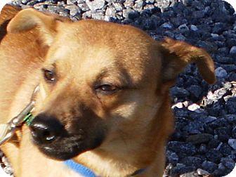Terrier (Unknown Type, Medium)/Corgi Mix Dog for adoption in Sylva, North Carolina - Rascal