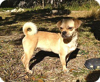Pug Mix Dog for adoption in Austin, Texas - Priscilla