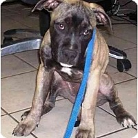 Adopt A Pet :: Chrissy - Chandler, IN