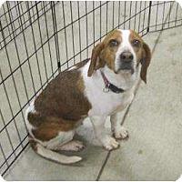 Adopt A Pet :: Serendipity - Alexandria, VA
