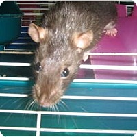 Adopt A Pet :: Louise - Cincinnati, OH