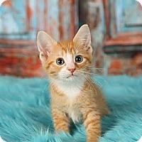 Adopt A Pet :: Public Enemy (P.E.) - Eagan, MN