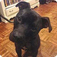 Adopt A Pet :: AVERY - Kingston, WA