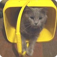 Adopt A Pet :: Rayne - Cocoa, FL