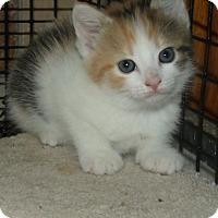 Adopt A Pet :: LORENA - Acme, PA