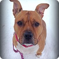 Adopt A Pet :: ROXY - Ojai, CA