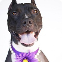 Adopt A Pet :: Nancie - LOS ANGELES, CA