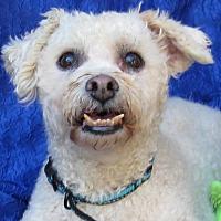 Adopt A Pet :: Casper - Cuba, NY