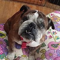 Adopt A Pet :: Rosie - Santa Ana, CA