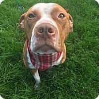 Adopt A Pet :: Captain - Avon, OH