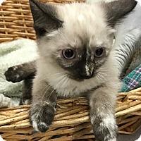 Adopt A Pet :: Yoselyn - Decatur, AL