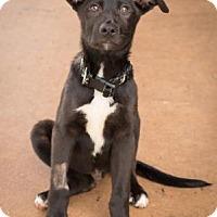 Adopt A Pet :: Xavier - Alpharetta, GA