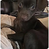 Adopt A Pet :: Mocha - Homestead, FL