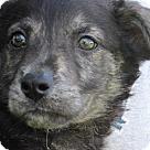Adopt A Pet :: Akaid