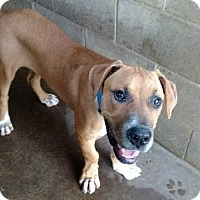 Adopt A Pet :: Julio - Geneseo, IL