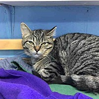 Adopt A Pet :: KETCHUP - Canfield, OH