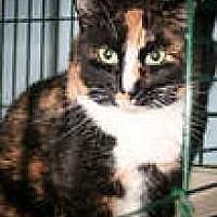 Adopt A Pet :: Brownie2 - Harleysville, PA
