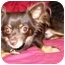 Photo 3 - Chihuahua Dog for adoption in Osseo, Minnesota - Riley