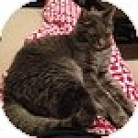 Adopt A Pet :: Charlie - Vancouver, BC