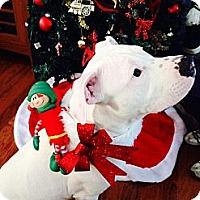 Adopt A Pet :: Capone - Oak Creek, WI