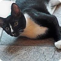 Adopt A Pet :: Dale - Secaucus, NJ
