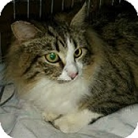 Adopt A Pet :: Two Toes - Modesto, CA