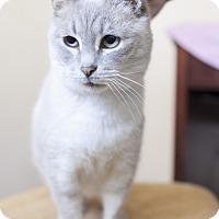 Adopt A Pet :: Princess - Fredericksburg, VA