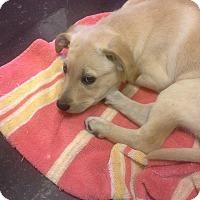 Adopt A Pet :: Bonnie - Silsbee, TX