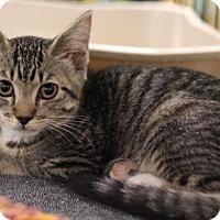 Adopt A Pet :: Tori - Sacramento, CA