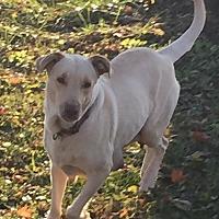 Adopt A Pet :: Scotch - Lancaster, KY