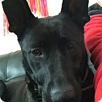 Adopt A Pet :: Jazzy - Lebanon, ME