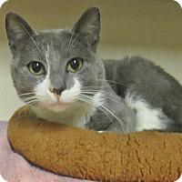 Adopt A Pet :: Coyote - Lloydminster, AB