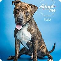 Adopt A Pet :: Kato - Jackson, NJ