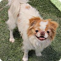Adopt A Pet :: Koopa - Phoenix, AZ