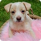 Adopt A Pet :: Edith