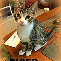 Adopt A Pet :: TIGER - Mooresville, NC