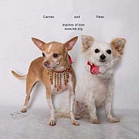 Adopt A Pet :: Peas & Carrots - Lake Forest, CA