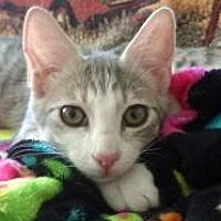 Adopt A Pet :: Tesla - Mission Viejo, CA