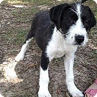 Adopt A Pet :: Pinkie - Adamsville, TN