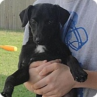 Adopt A Pet :: Jacques - Glenpool, OK