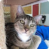 Adopt A Pet :: Castor - Kingston, WA