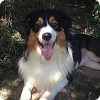 Adopt A Pet :: Hugo - Washington, IL