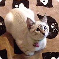 Adopt A Pet :: Selena - Birmingham, AL